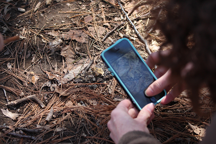 Taking a smartphone photo for iNaturalist