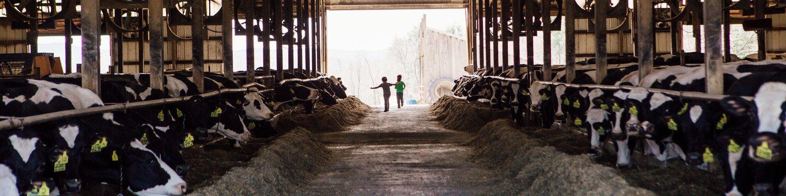 Woodnotch Farm